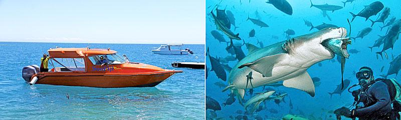 [左圖]搭船跳島遊斐濟最過癮,[右圖]貝卡島獨特的與鯊共游活動